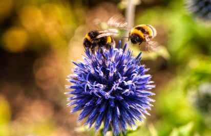animal bees bloom blooming